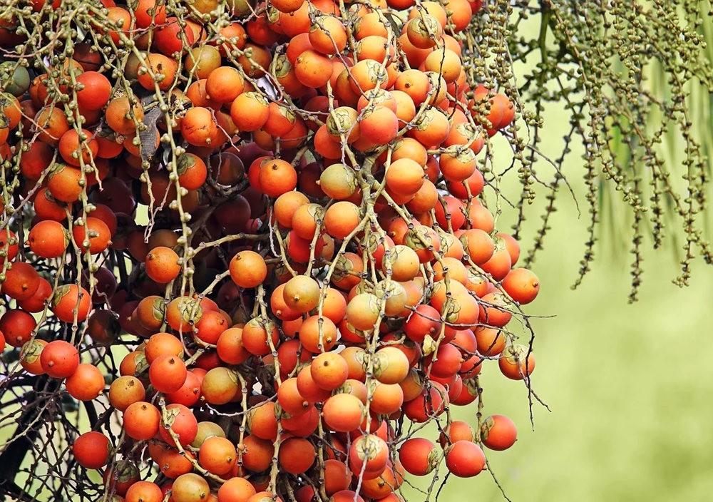 班加罗尔植物园--看花观鸟_图1-5