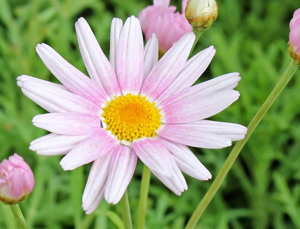 班加罗尔植物园--看花观鸟_图1-10
