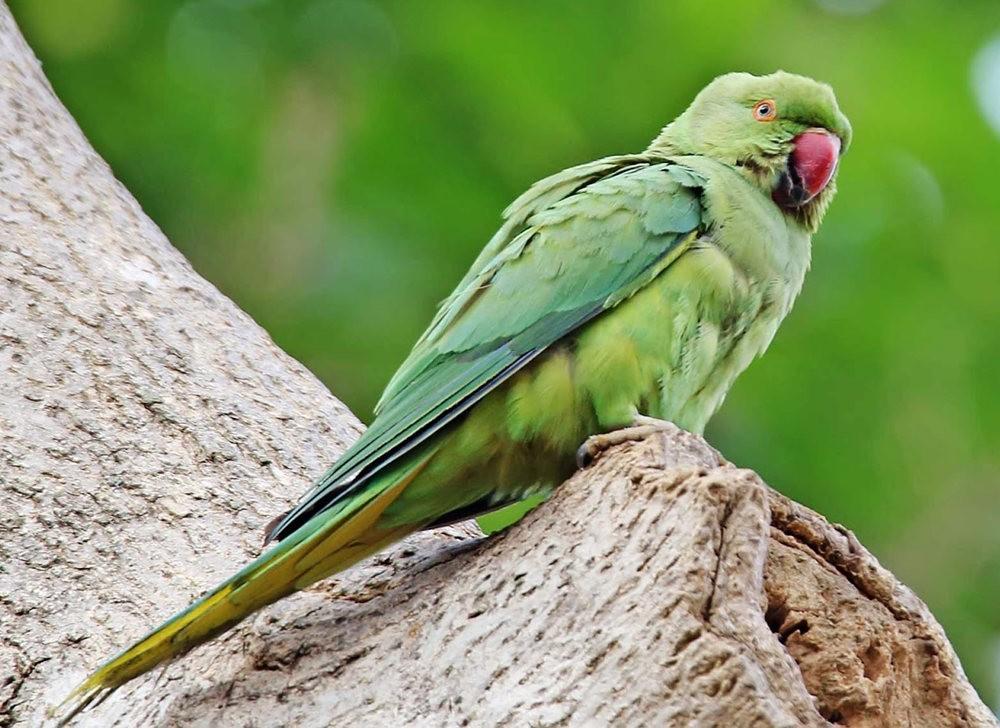 班加罗尔植物园--看花观鸟_图1-11