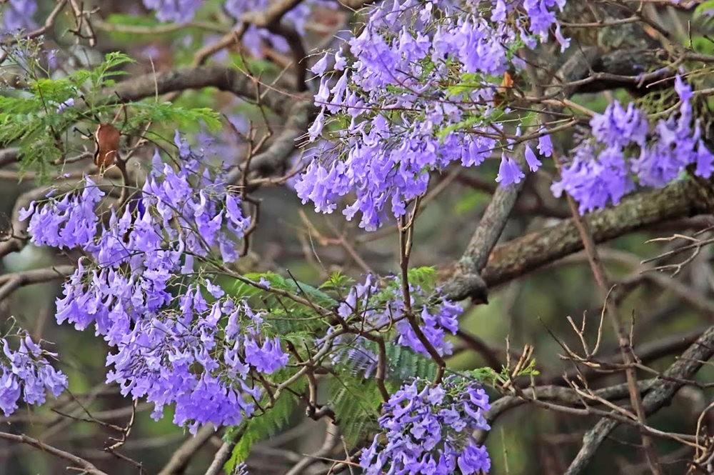 班加罗尔植物园--看花观鸟_图1-12
