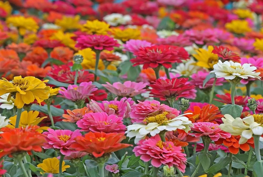 班加罗尔植物园--看花观鸟_图1-16