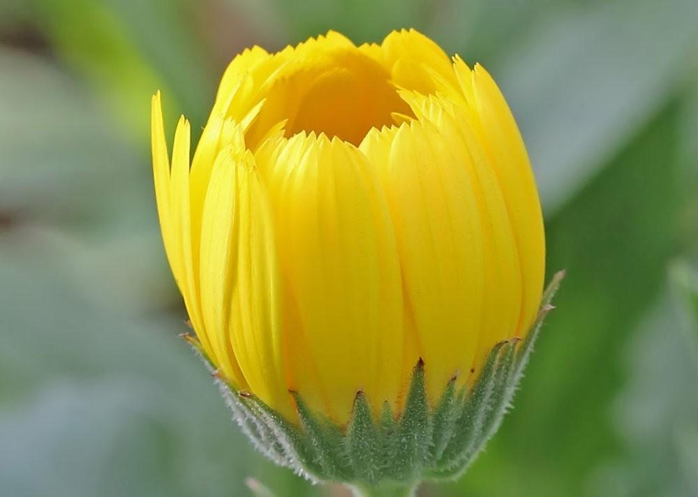 班加罗尔植物园--看花观鸟_图1-18