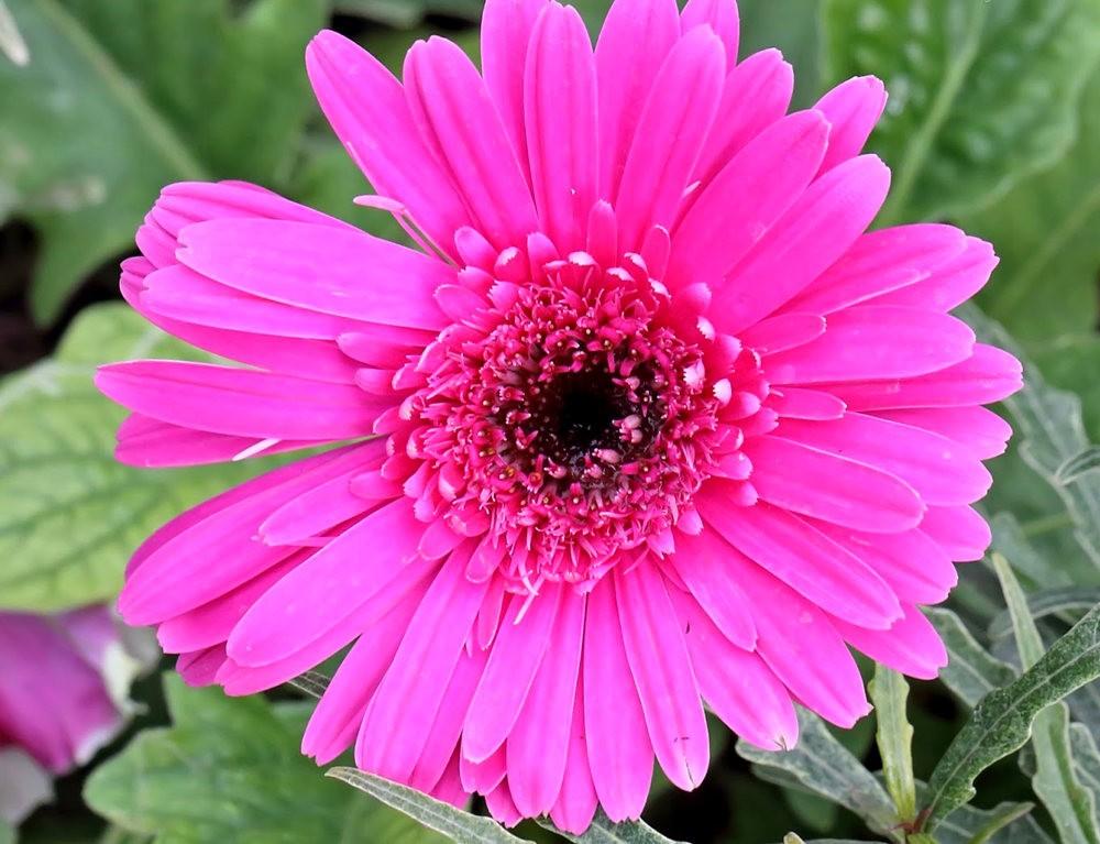 班加罗尔植物园--看花观鸟_图1-20