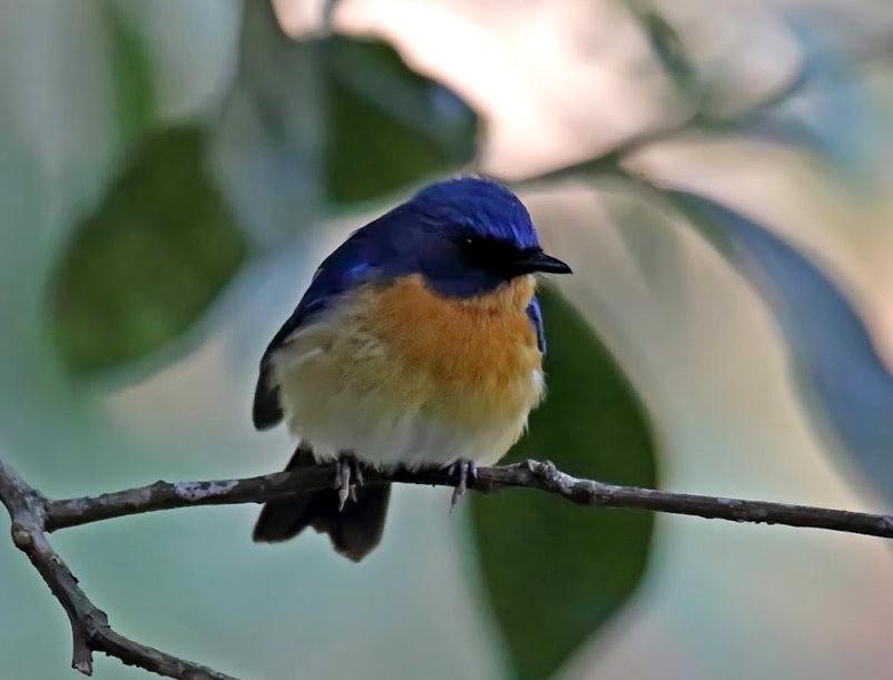 班加罗尔植物园--看花观鸟_图1-21
