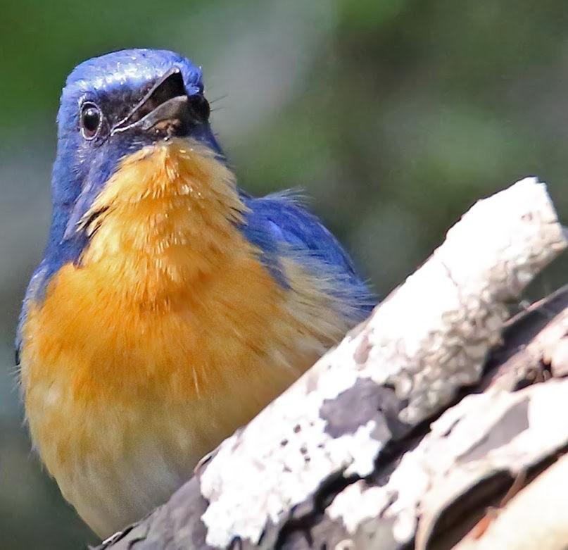 班加罗尔植物园--看花观鸟_图1-23