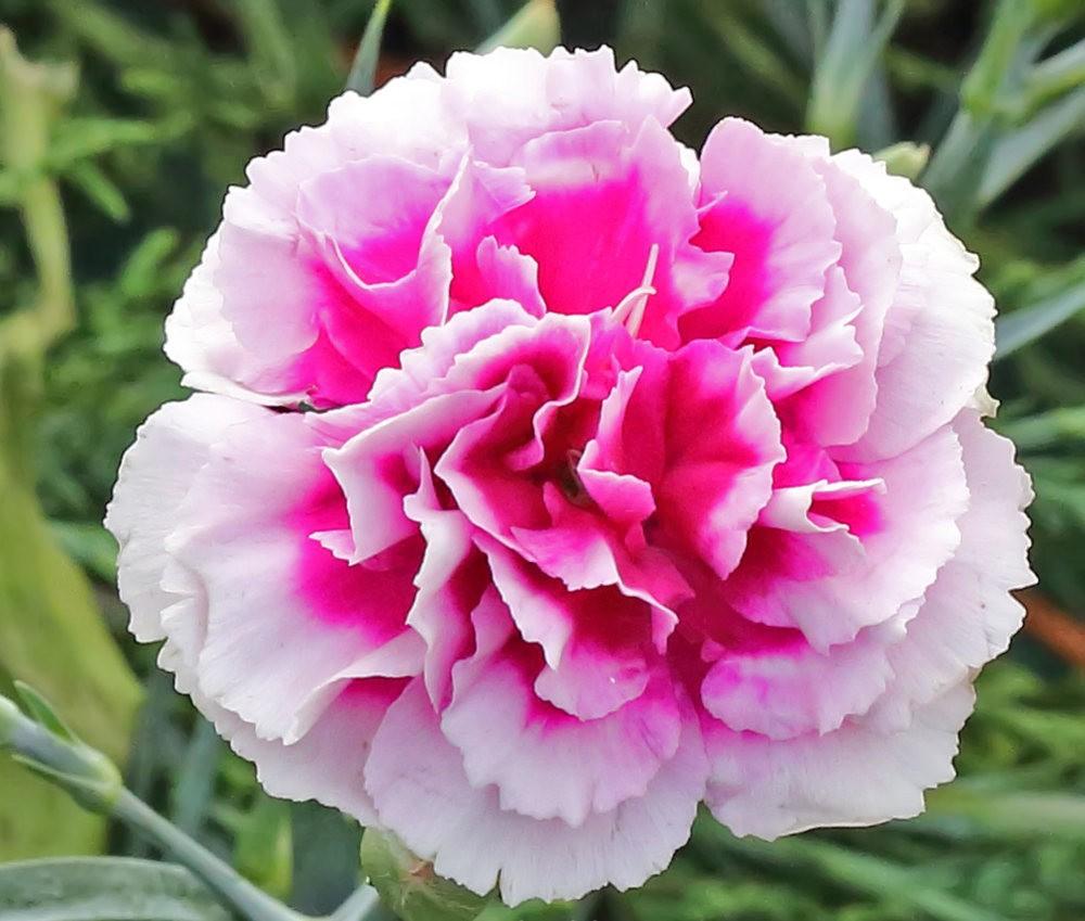 班加罗尔植物园--看花观鸟_图1-24
