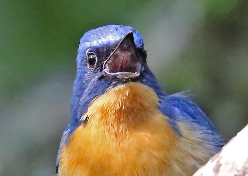 班加罗尔植物园--看花观鸟_图1-25