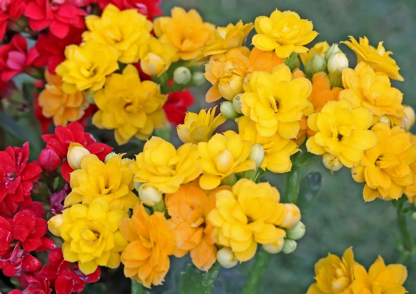 班加罗尔植物园--看花观鸟_图1-28