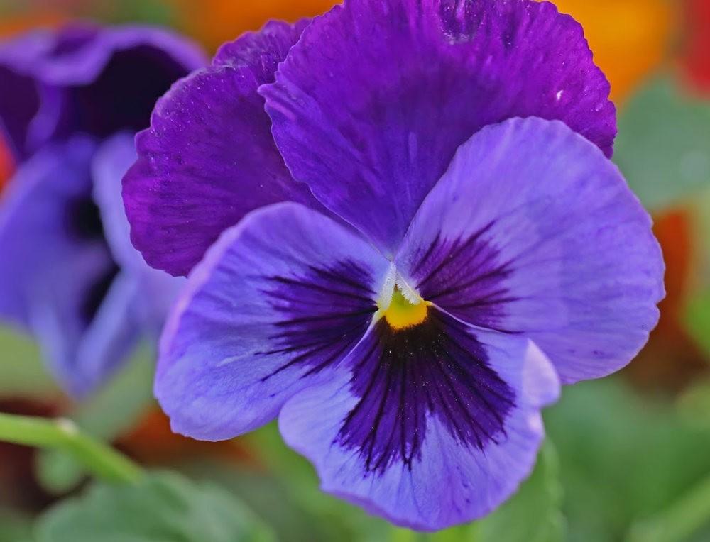 班加罗尔植物园--看花观鸟_图1-30