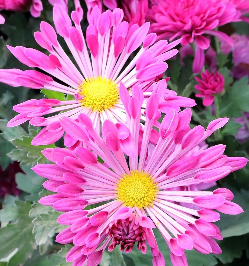 班加罗尔植物园--看花观鸟_图1-31