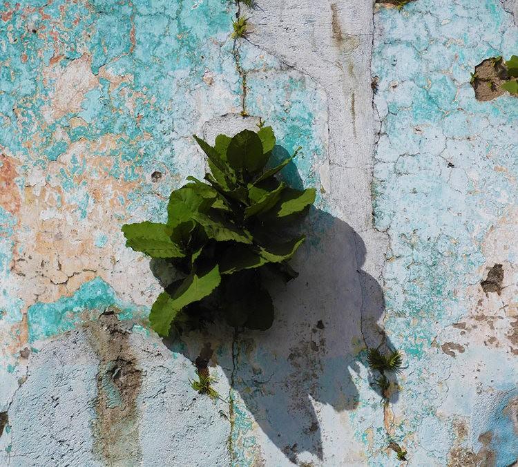 安提瓜----危地马拉的城镇_图1-11