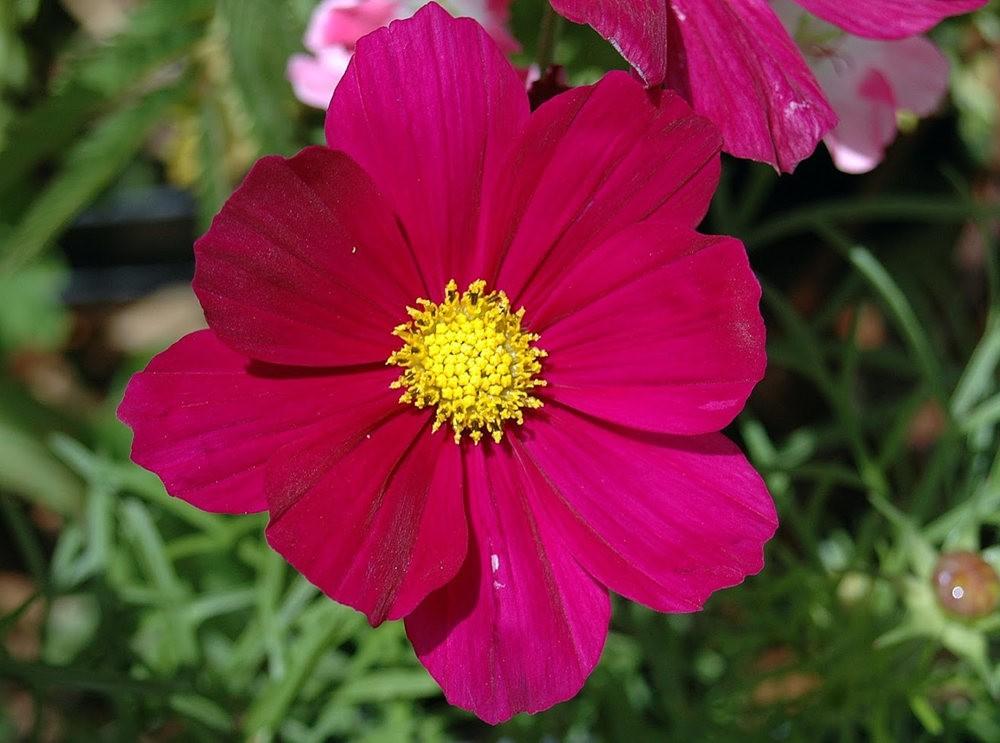 瓦伦西亚植物园看花_图1-1