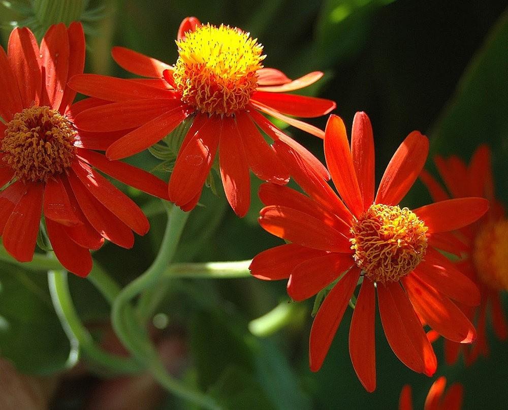 瓦伦西亚植物园看花_图1-3