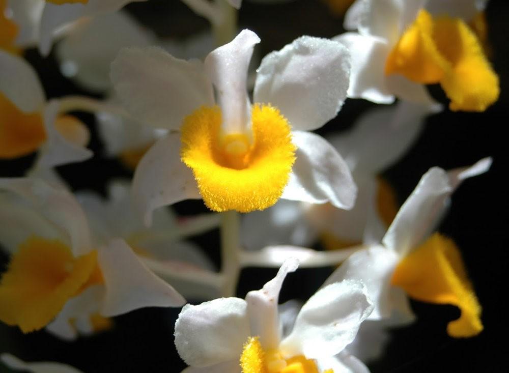 瓦伦西亚植物园看花_图1-8
