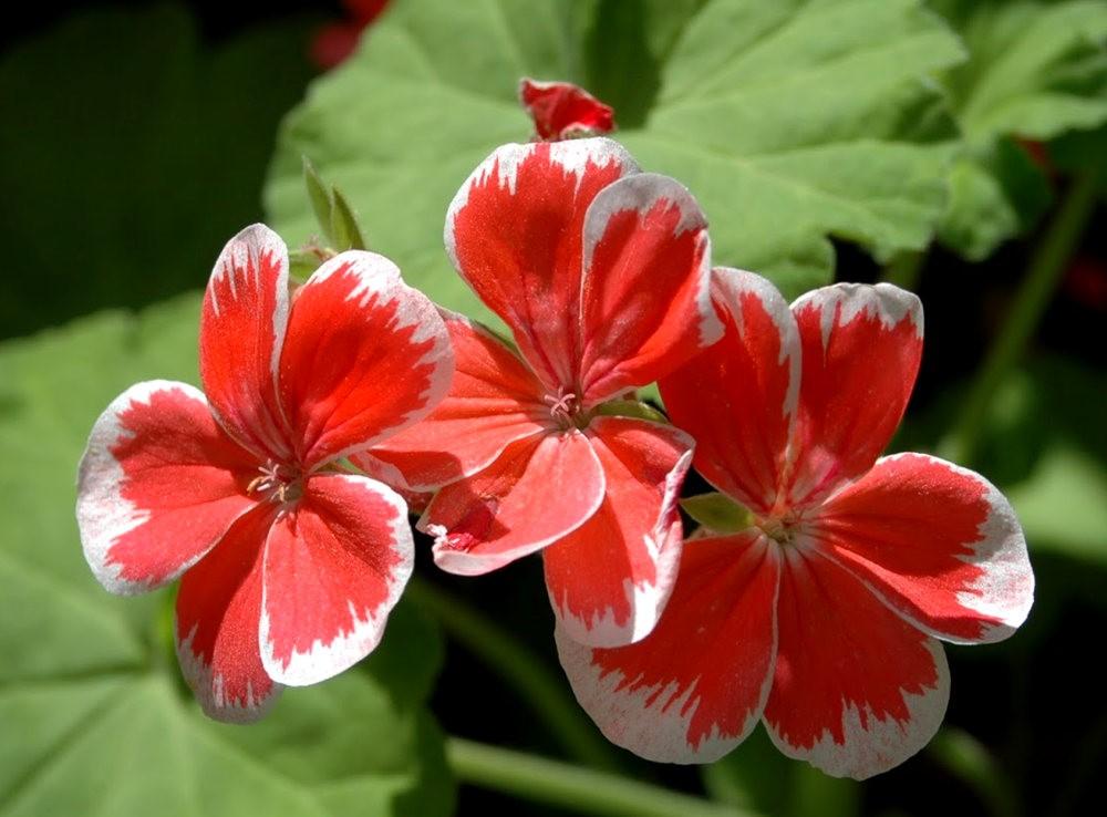 瓦伦西亚植物园看花_图1-9