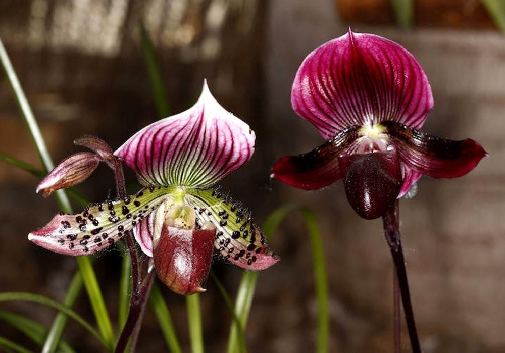 瓦伦西亚植物园看花_图1-11