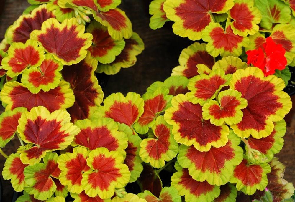 瓦伦西亚植物园看花_图1-13