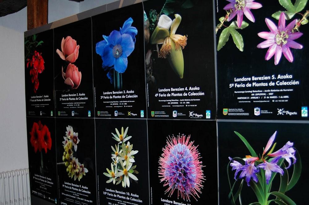 瓦伦西亚植物园看花_图1-15