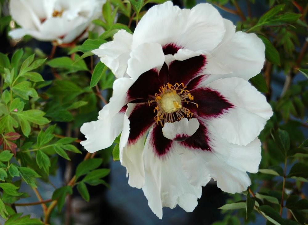 瓦伦西亚植物园看花_图1-16
