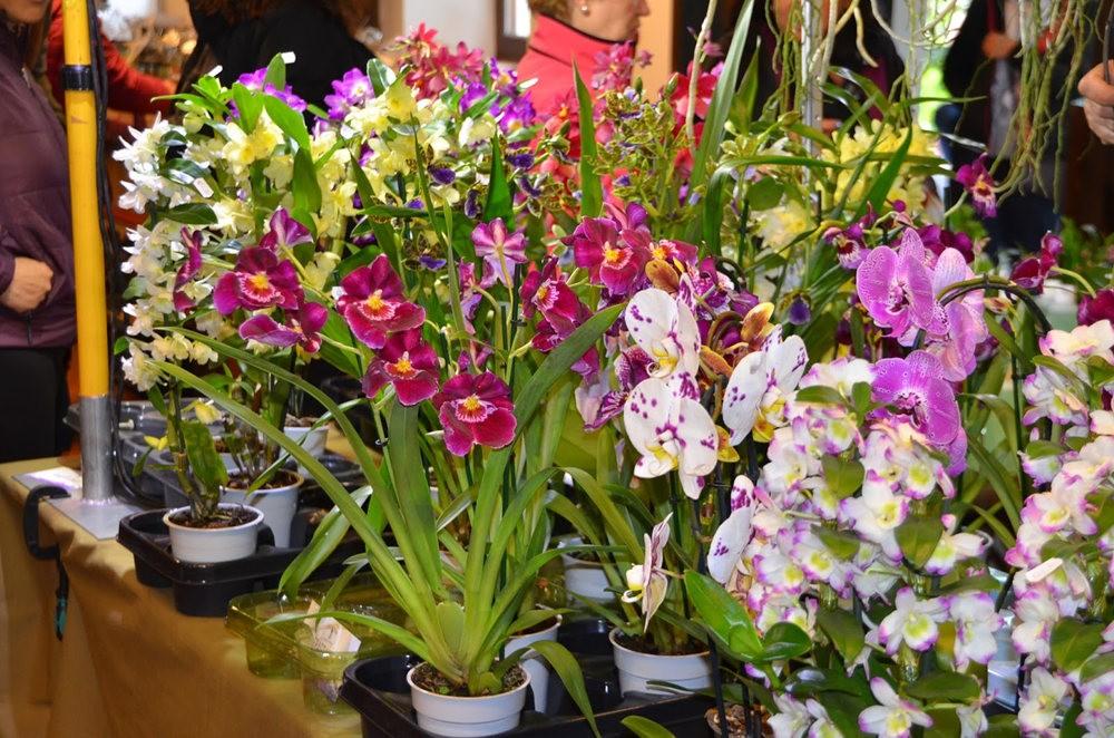 瓦伦西亚植物园看花_图1-18