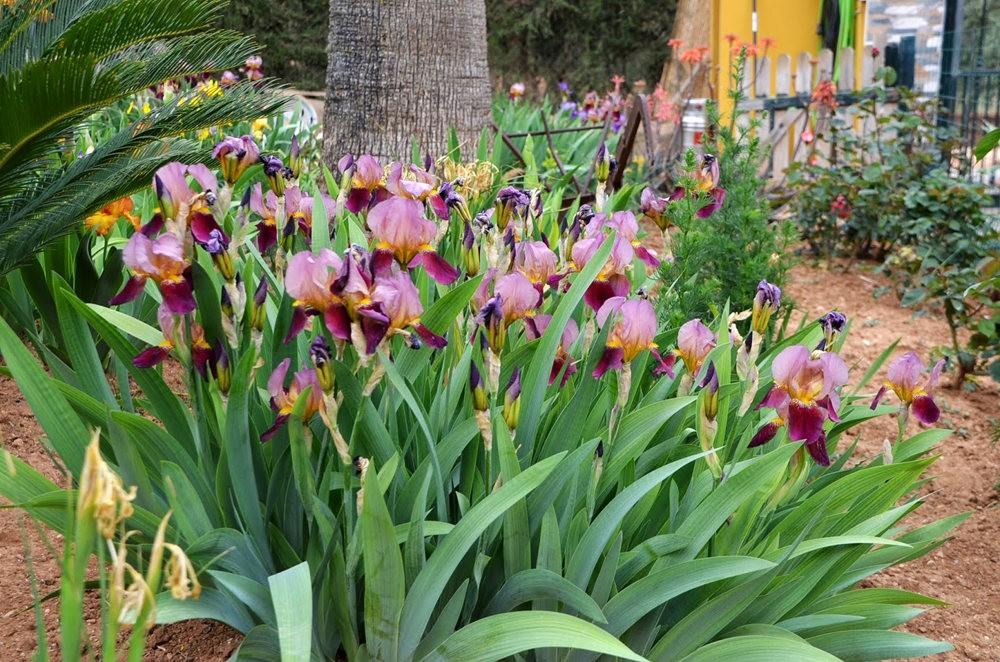 瓦伦西亚植物园看花_图1-20