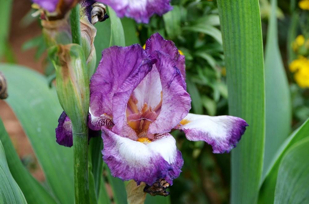 瓦伦西亚植物园看花_图1-21