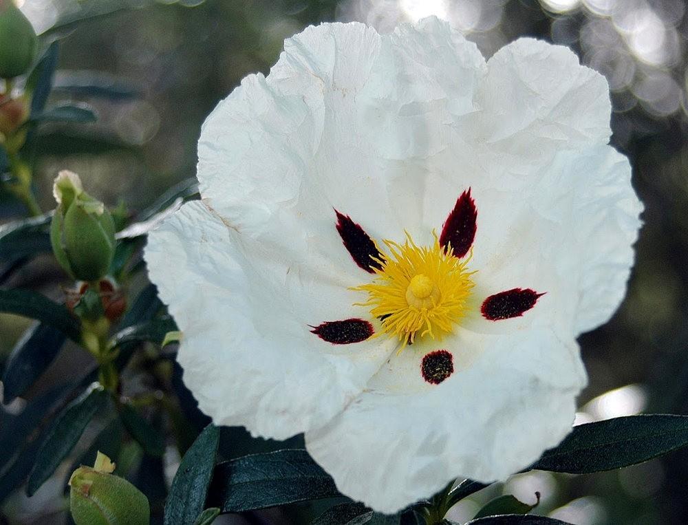 瓦伦西亚植物园看花_图1-26