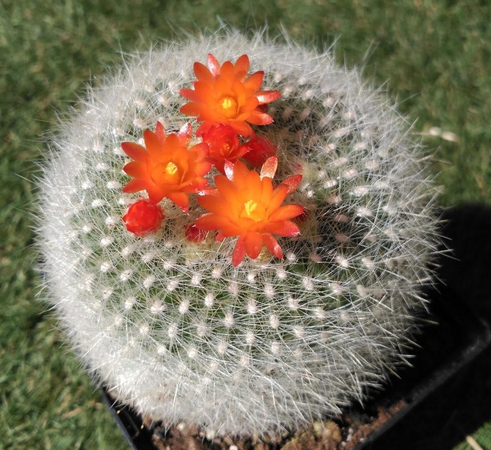 瓦伦西亚植物园看花_图1-27