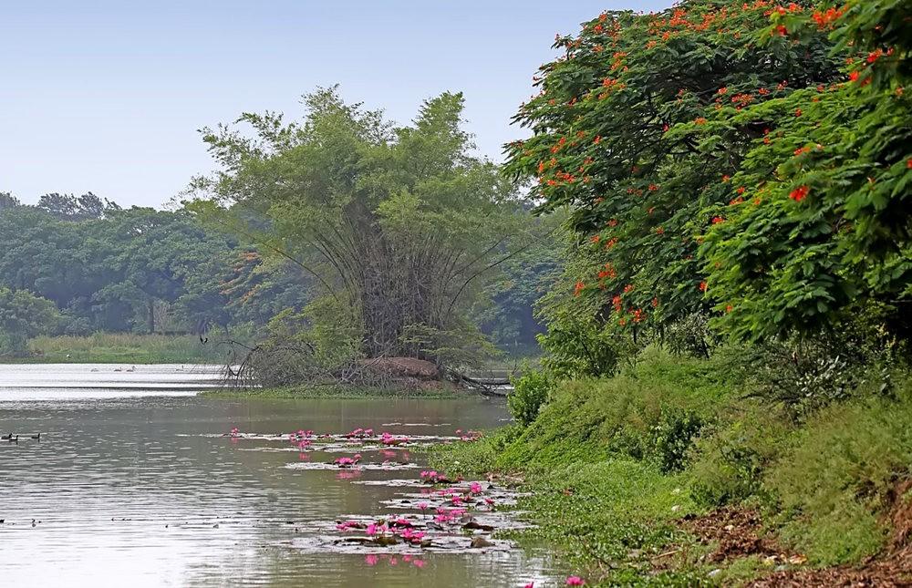 看看Hebbal Lake 湖_图1-2