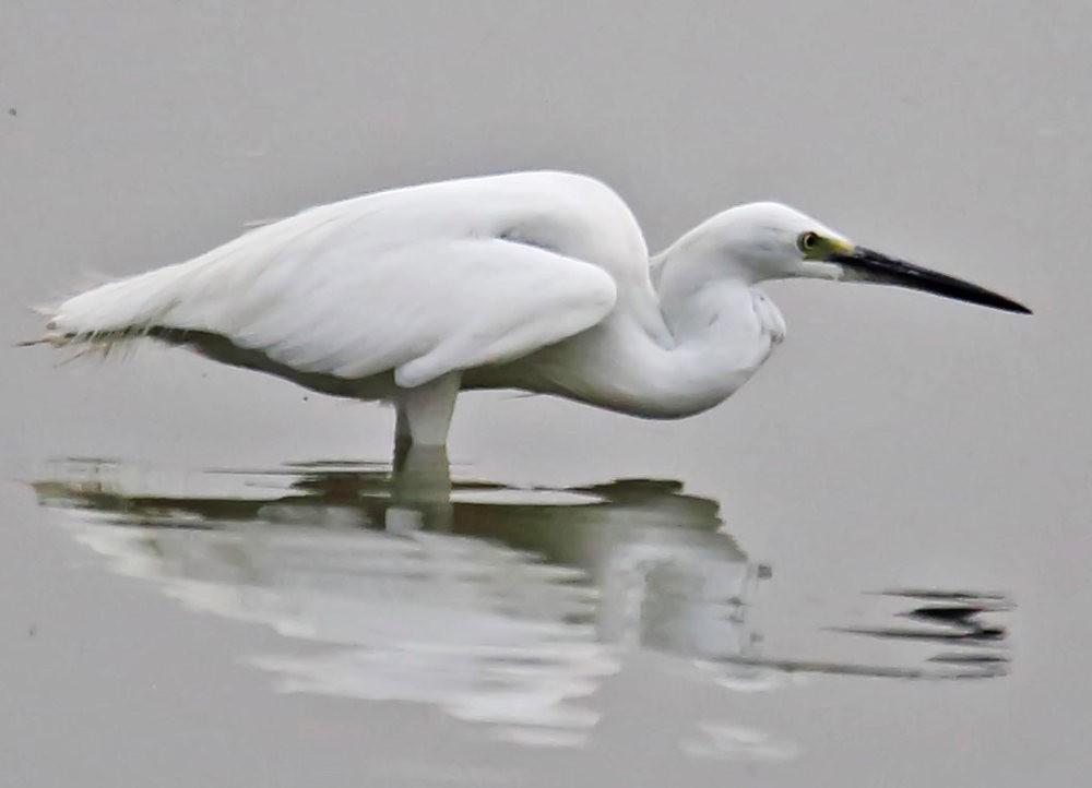 看看Hebbal Lake 湖_图1-30