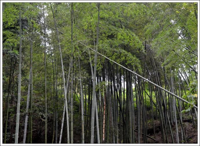 月光岩游记(七律)_图1-4