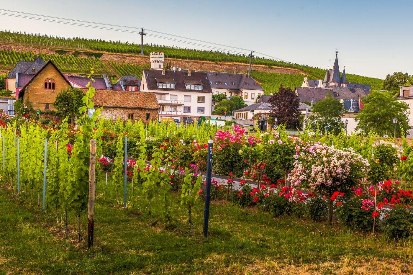 德国吕德斯海姆(Rudesheim),莱茵河畔的小镇_图1-20