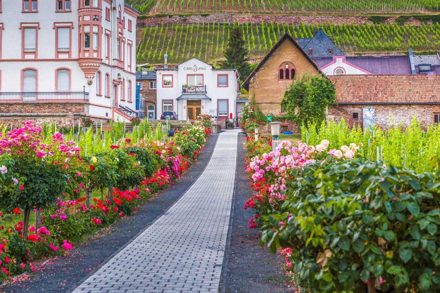 德国吕德斯海姆(Rudesheim),莱茵河畔的小镇_图1-11