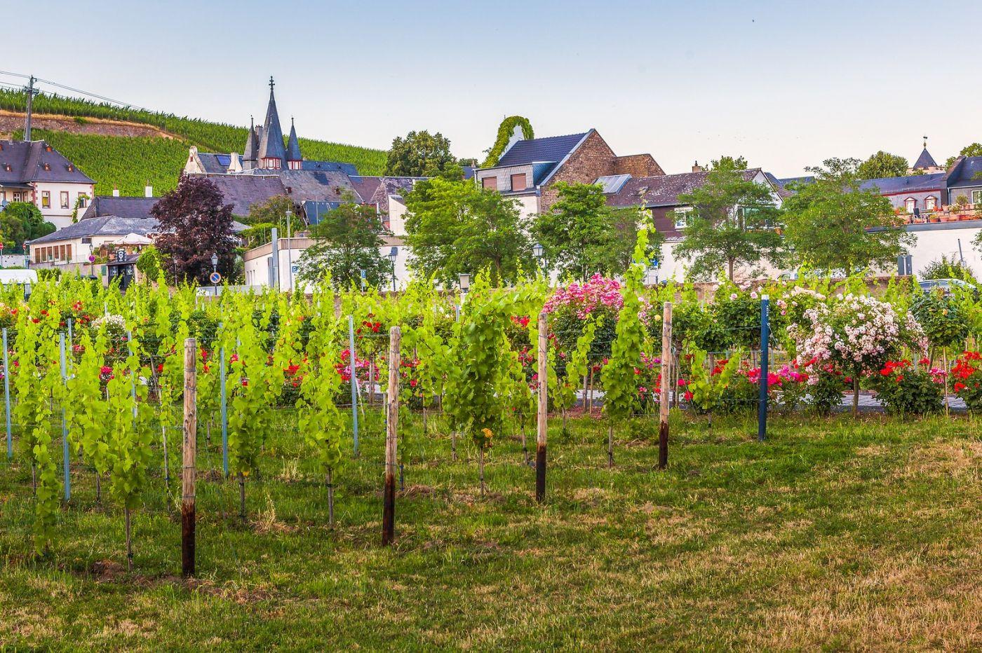 德国吕德斯海姆(Rudesheim),莱茵河畔的小镇_图1-3
