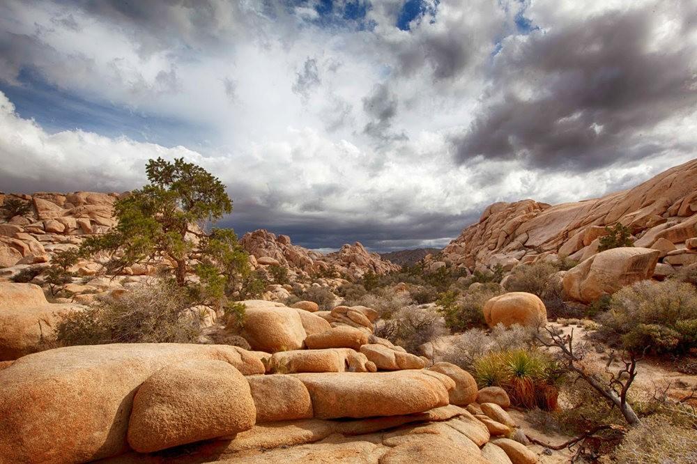 约书亚树国家公园石阵---2 仙境岩区_图1-3
