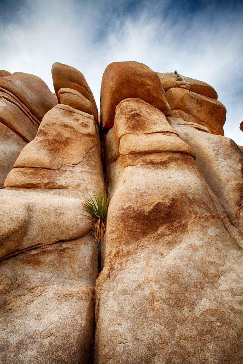 约书亚树国家公园石阵---2 仙境岩区_图1-6