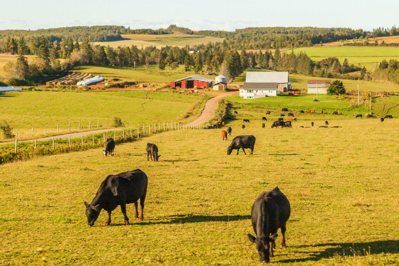 加拿大旅途,乡村的幸福生活_图1-38