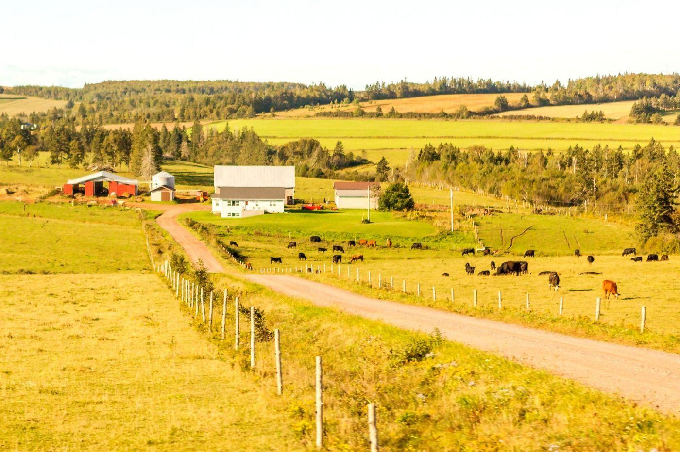 加拿大旅途,乡村的幸福生活_图1-22