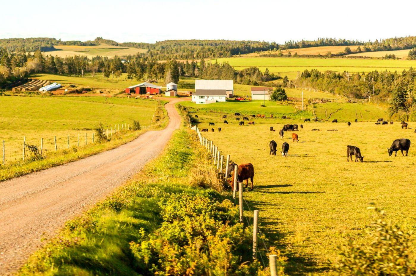 加拿大旅途,乡村的幸福生活_图1-16