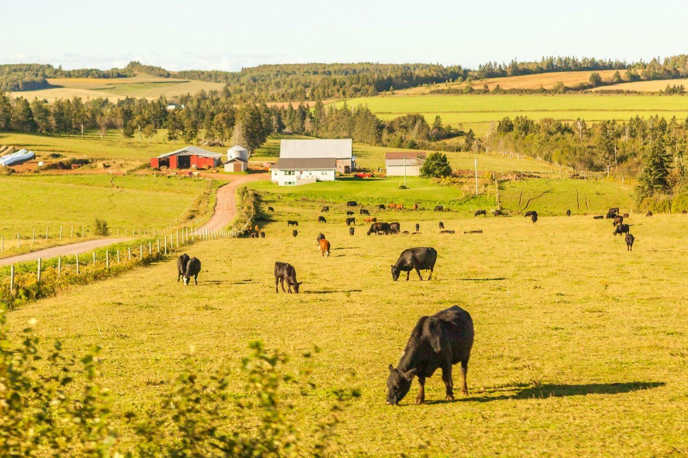 加拿大旅途,乡村的幸福生活_图1-1