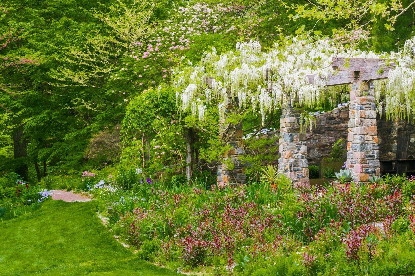 Chanticleer花园,那年盛开的紫藤花_图1-15