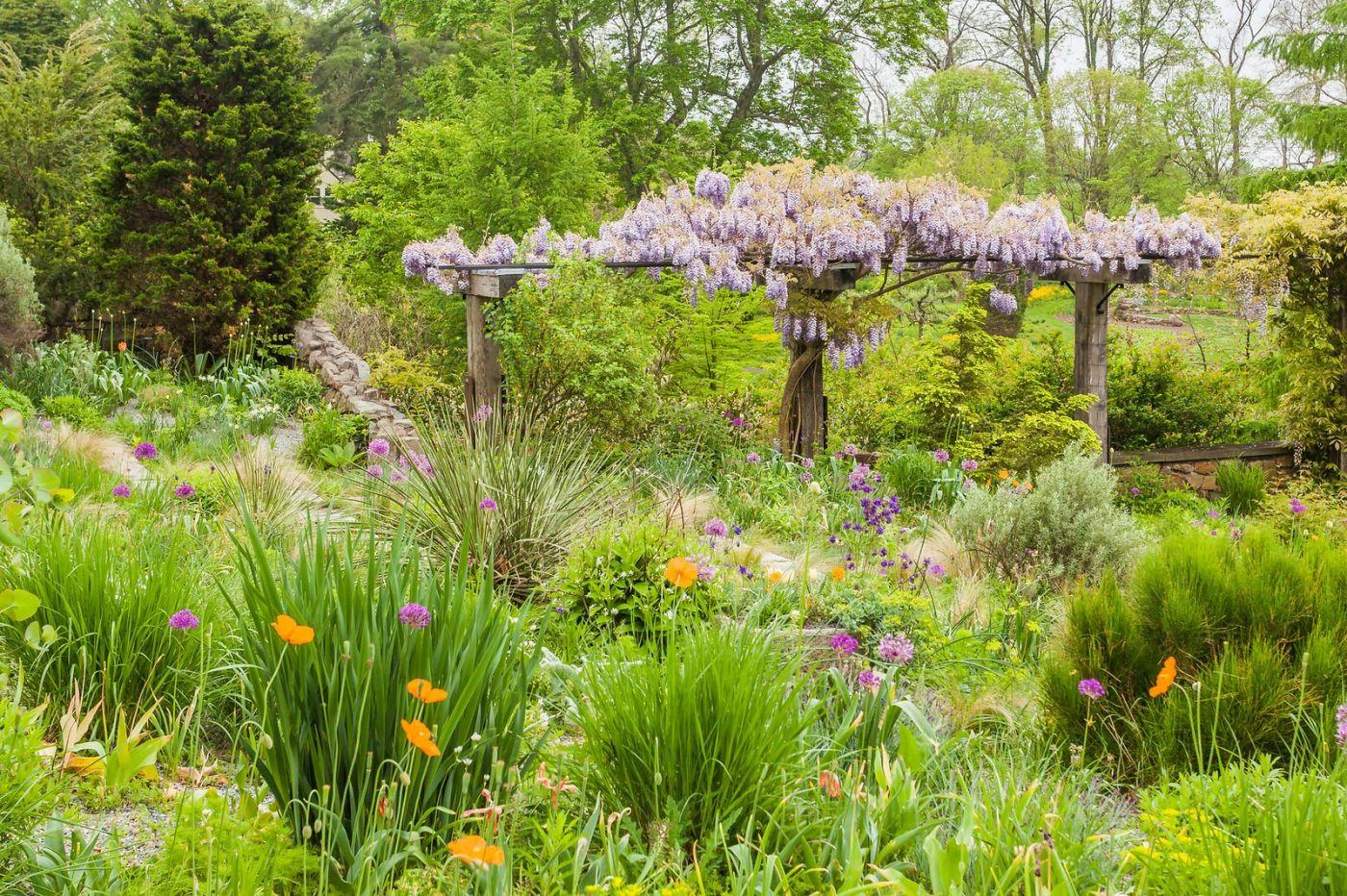 Chanticleer花园,那年盛开的紫藤花_图1-16