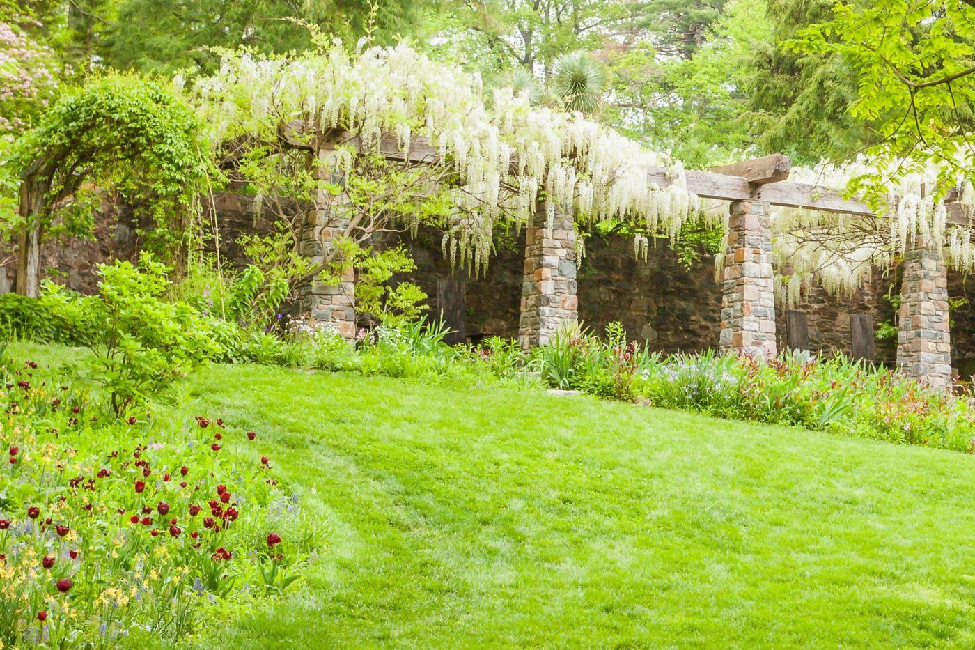 Chanticleer花园,那年盛开的紫藤花_图1-14