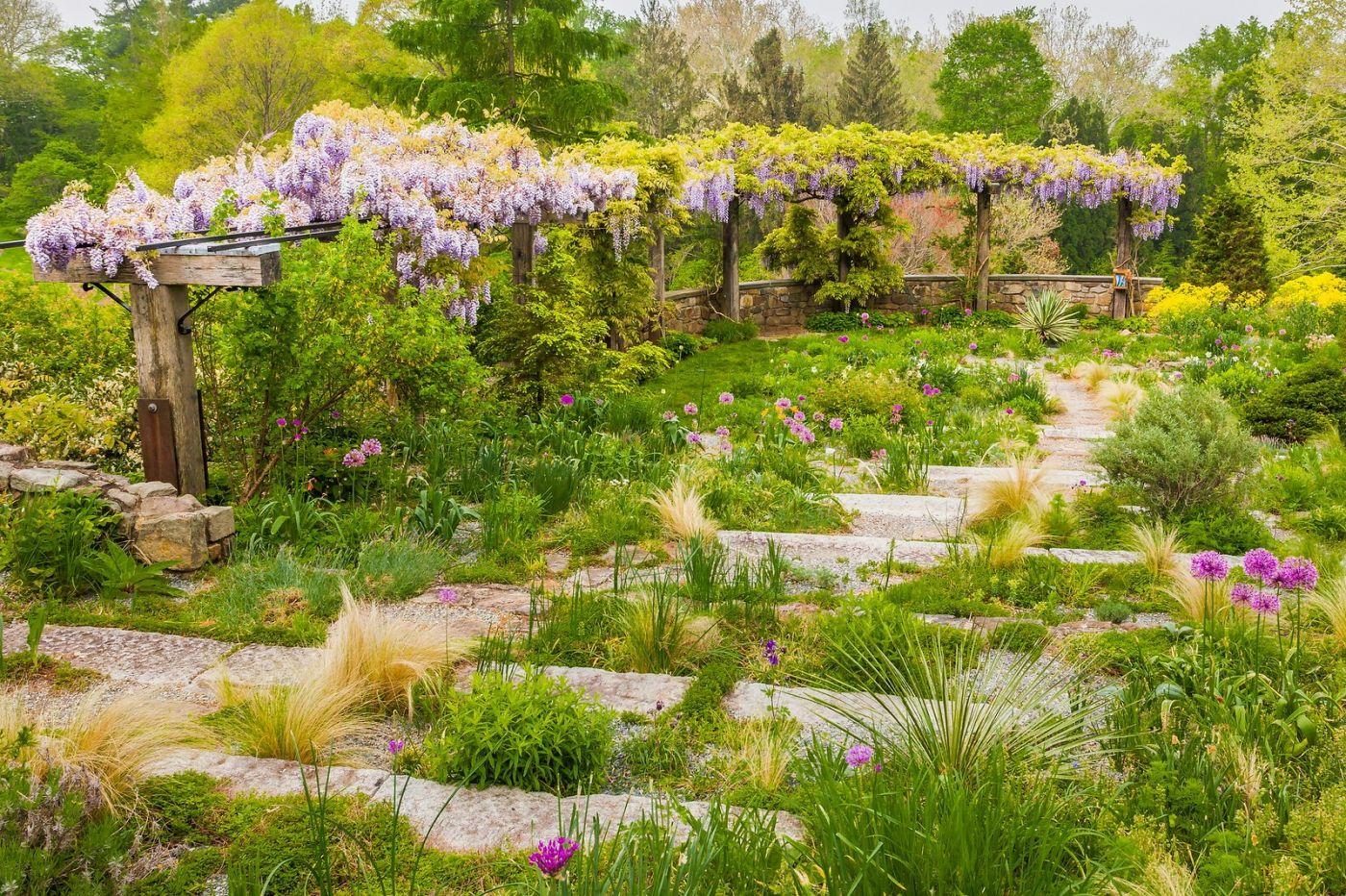 Chanticleer花园,那年盛开的紫藤花_图1-9