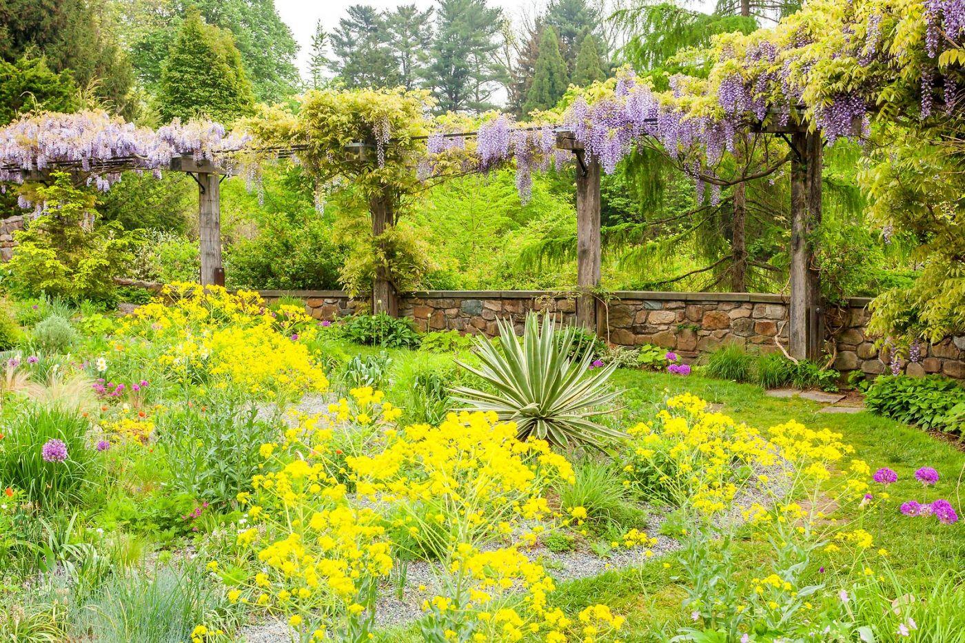 Chanticleer花园,那年盛开的紫藤花_图1-2