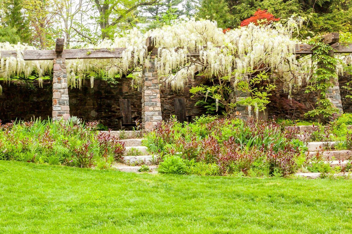 Chanticleer花园,那年盛开的紫藤花_图1-17