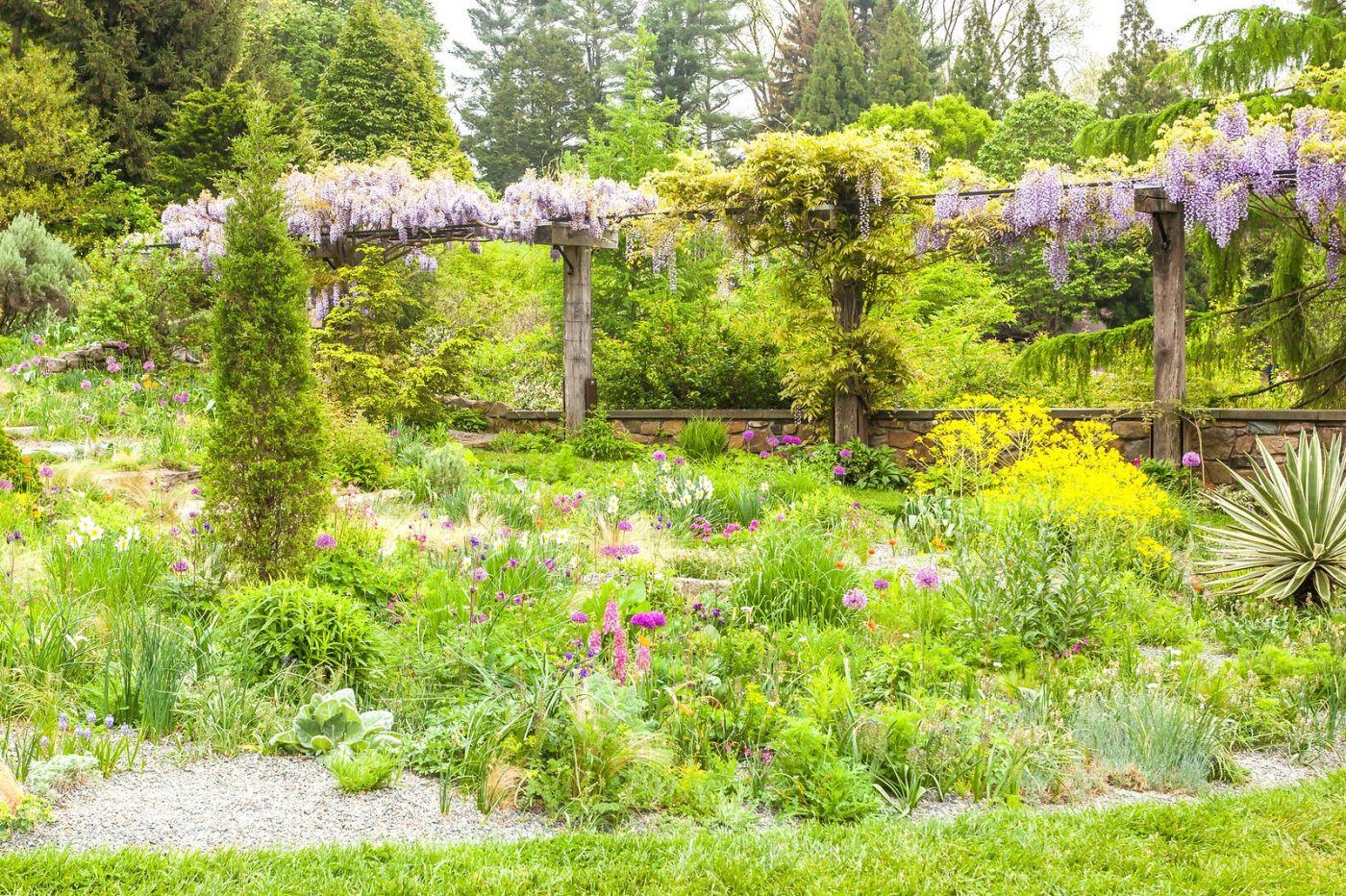 Chanticleer花园,那年盛开的紫藤花_图1-18