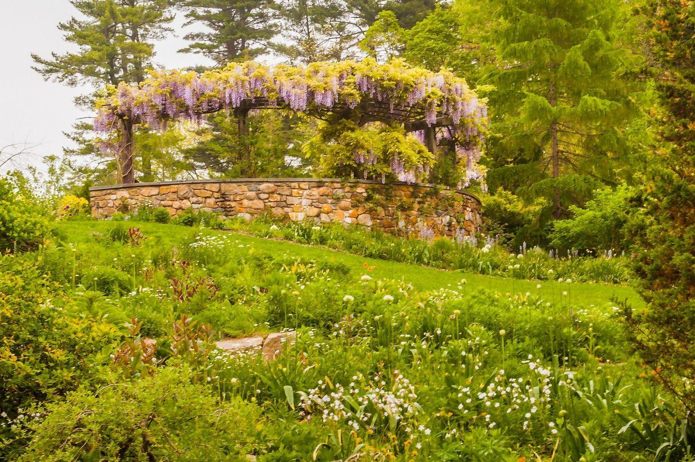 Chanticleer花园,那年盛开的紫藤花_图1-22