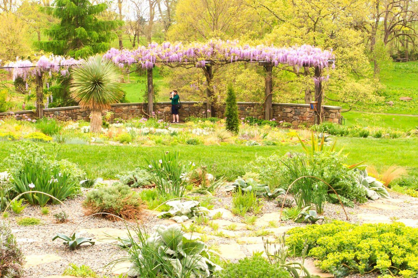 Chanticleer花园,那年盛开的紫藤花_图1-26