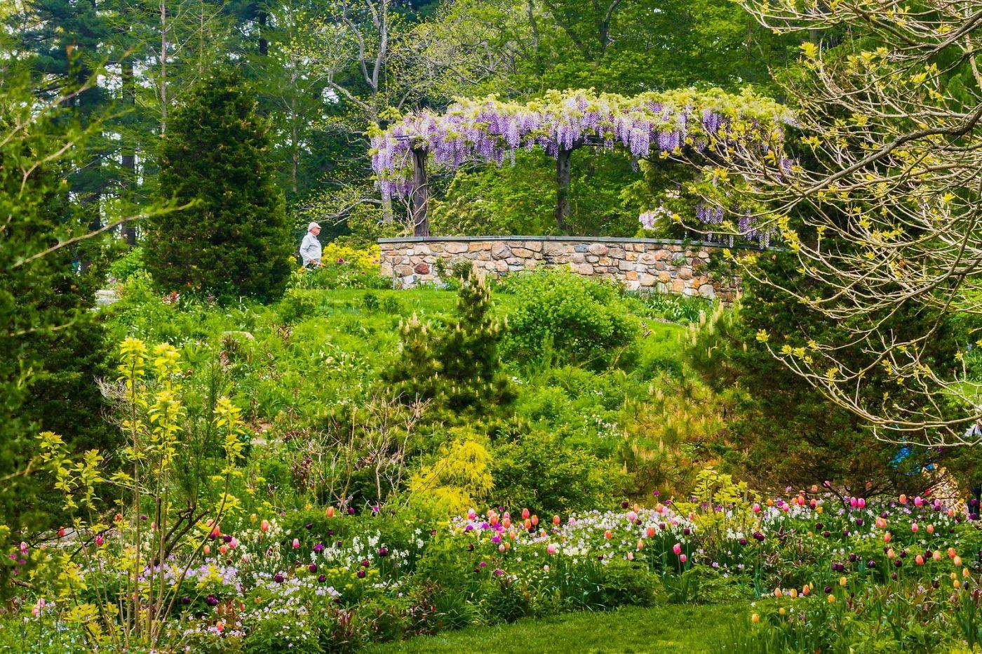 Chanticleer花园,那年盛开的紫藤花_图1-31